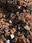 50 ton shredded motors for sale ex UK